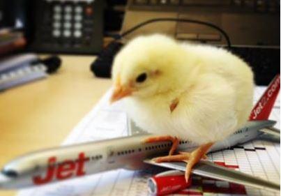 jet2 chicks